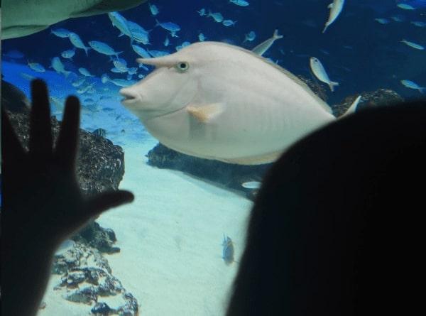 角がある魚